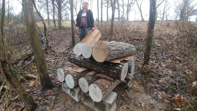Mushroom logs placed in the woods 1-4-19