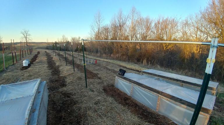 Tomato trellis set up and garden rows marked by putting sawdust down on the paths.    2-2-20