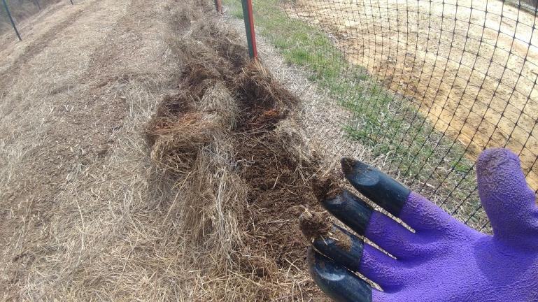 Our new Favorite Tool the Claw Gloves - great for making planting rows in deep hay  2-23-20