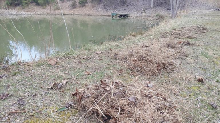 Using a pond rake to clear dead plant matter and Algae from the sides while we try to fix the airator.  3-7-19