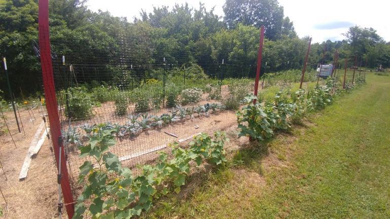 Cucumbers, Tuscan Kale, Tomatoes, Yarrow 7-11-19