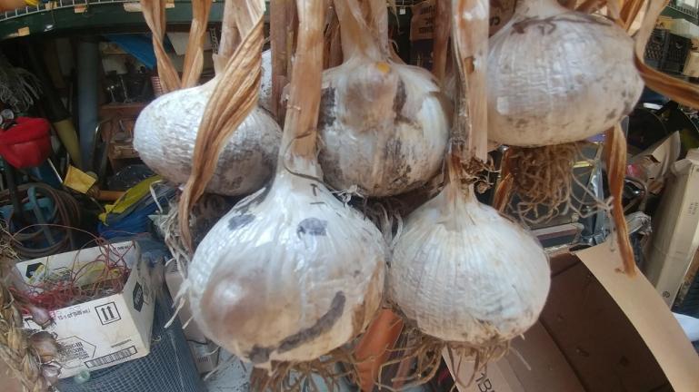 Happy Garlic Face 8-7-20