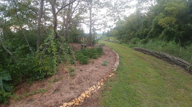 Dye Garden on the left on the Asparagus right 8-31-20