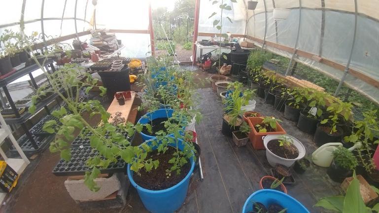 Greenhouse 8-31-20