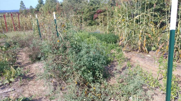 Fence line needs to be better secured to the Tposts, all of our trellis lines hae sagged significantly or fallen completly.