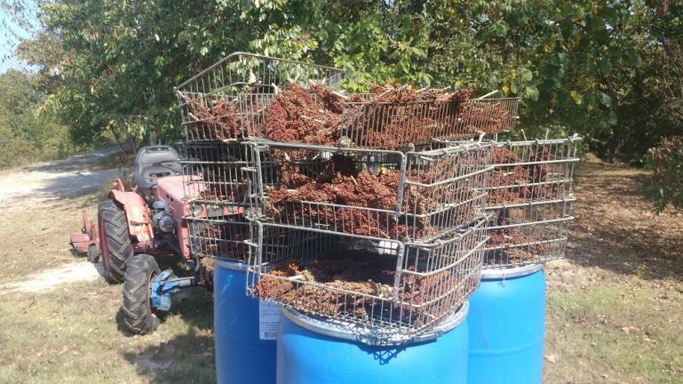 Sorghum Grain Drying 9-29-19