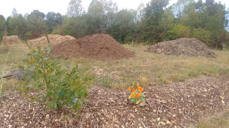 Fresh Mulch, Seasoned Mulch and Almost Dirt Mulch with Blueberry and Nasturtium in the foreground 10-6-19