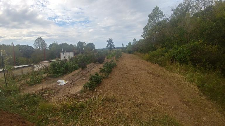 Mowed the edge of the River and the former Squash row.  Prepping for Garlic planting.  10-11-9