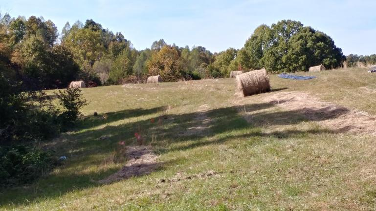Hay rolls positioned by the fruit & nut contour lines for swale buildingt 10-24-18
