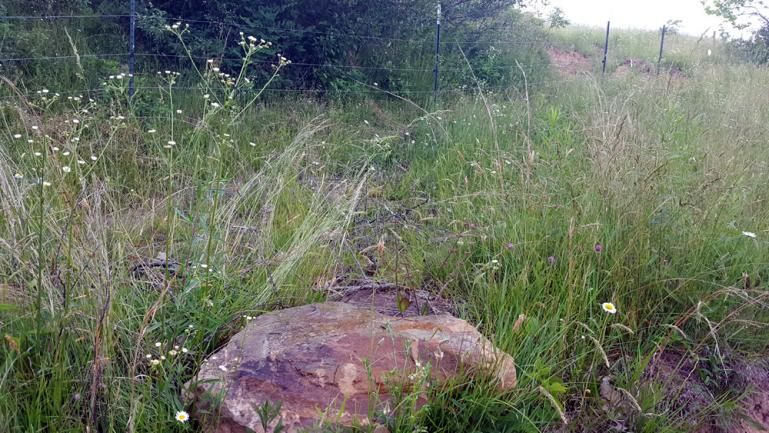 Man urine marked rock near fence line