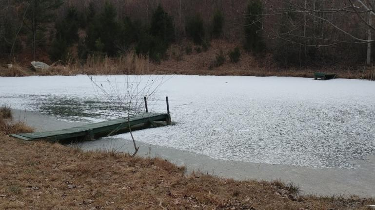 The pond froze over for a while last winter and I believe that contributed to the algae bloom problem that we're just now getting under control.  Managing a fully stocked pond has a learning curve.  Freaked out by the persistent algae in my swimming/fishing hole; I put in too much beneficial bacteria creating a small fish kill because the dyeing algae sucks the oxygen out of the water.