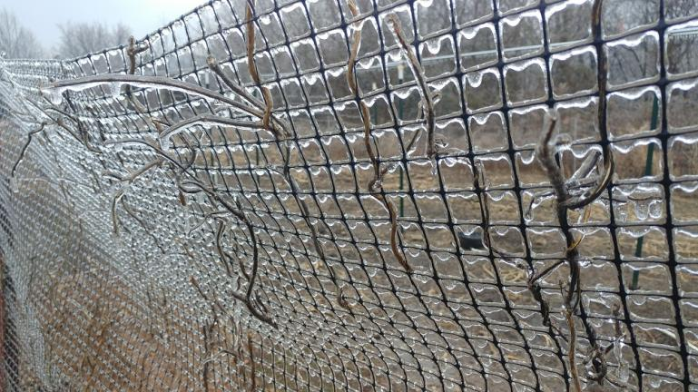 Ice Storm on the bean trellis 2-11-21
