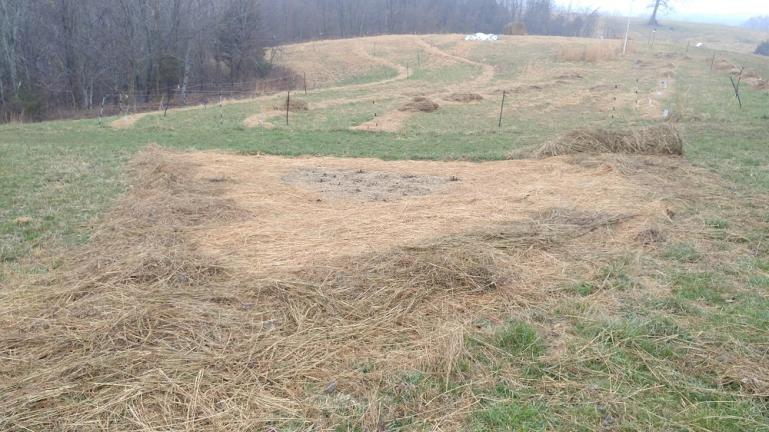 Covering thin spots with more hay