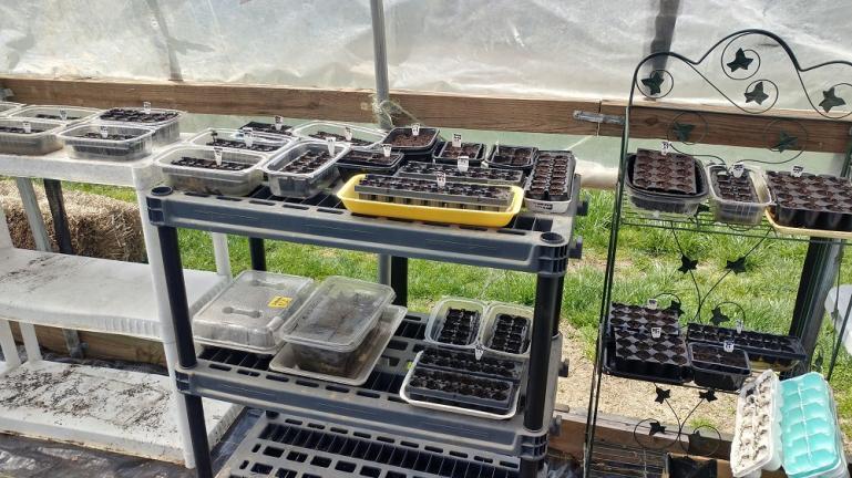 Seeds a startin: 4-4-20