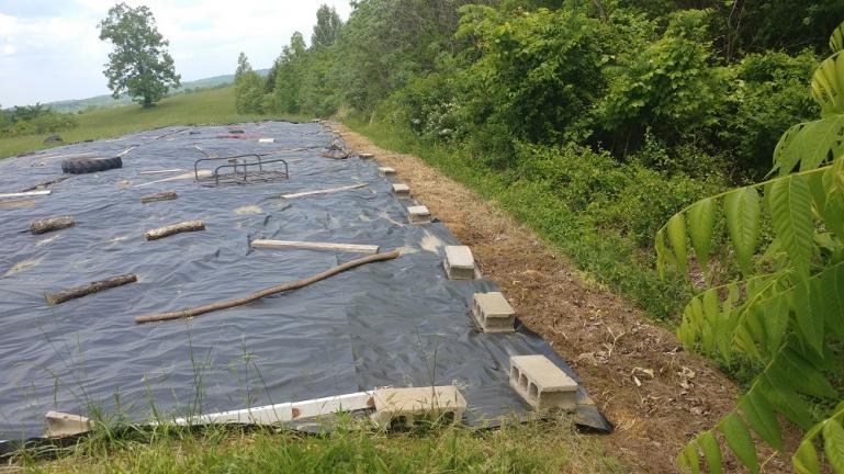 Planted Perimeter Fence of Milk Thistle, Cleome, Onion and Wild Dagga.  5/14/18