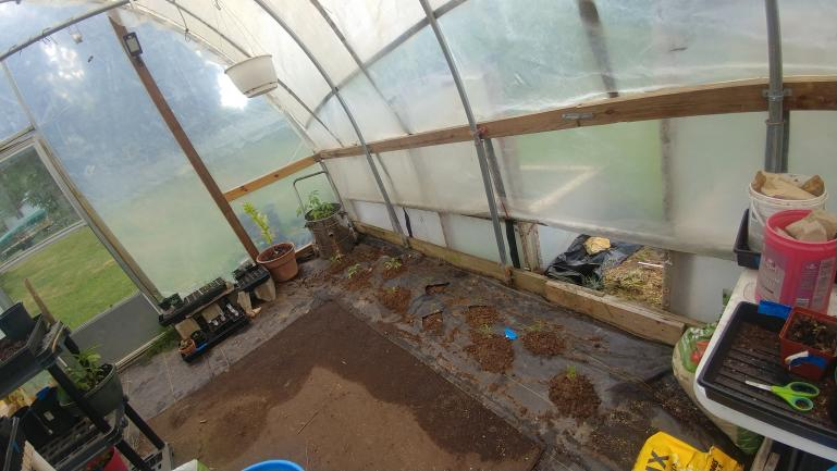 Greenhouse tomatoes planted - Bumblebees and  Yellow Gooseberries  6-7-21