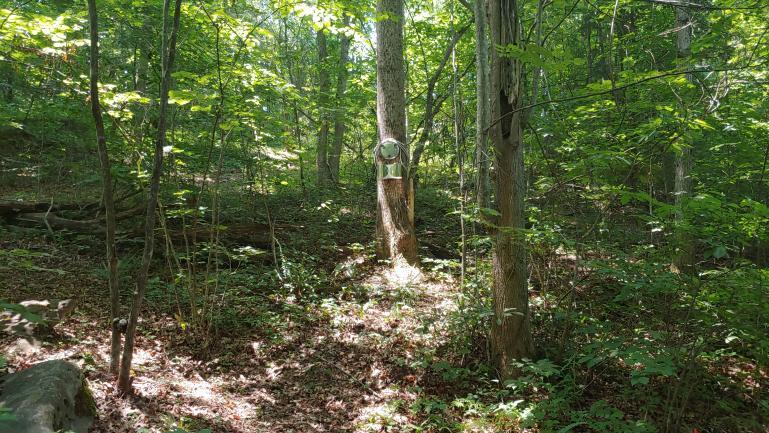 Trail Art