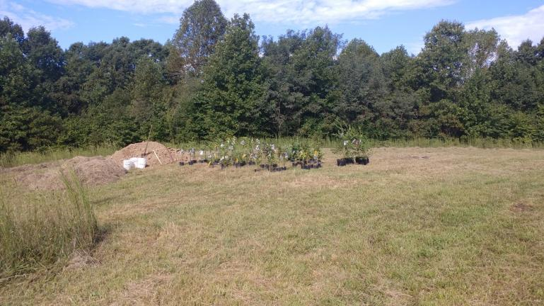 Top soil, hay mulch and berry plants