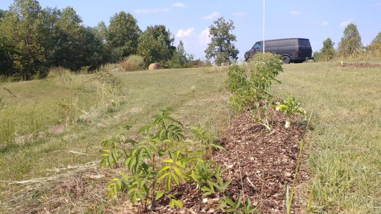 Mulch added to Elderberry row 9-20-19