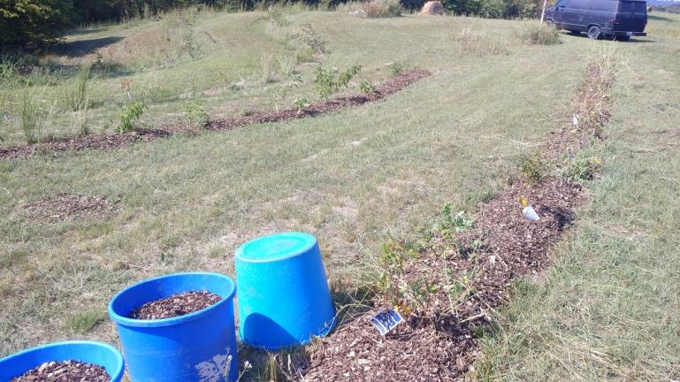 Mulching Blueberry and Elderberry rows 9-20-19