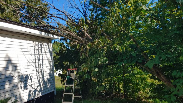 Dead Tree on House 9-26-21