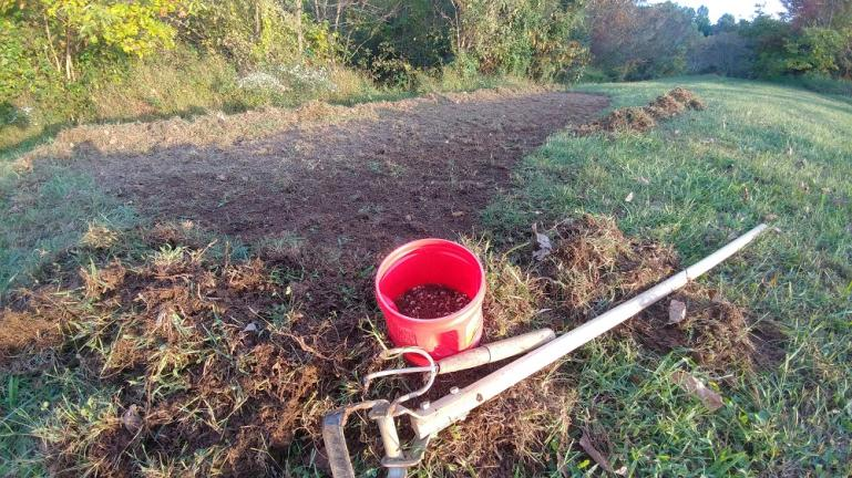 Garlic Planting Prep October '17.  Stripped the grass off with a stirrup hoe..
