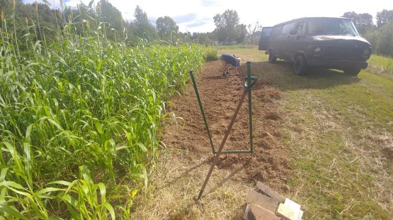 Stirrup Hoe and Broad Forked Garlic patch 10-9-18