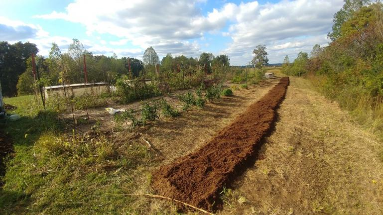 3x100 bed for Garlic. fresly topped with well composted sawdust 10-16-19