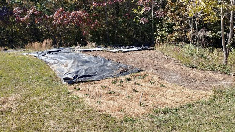 Plastic Moved in the Corner Pocket to open space for Garlic planting  10-24-19