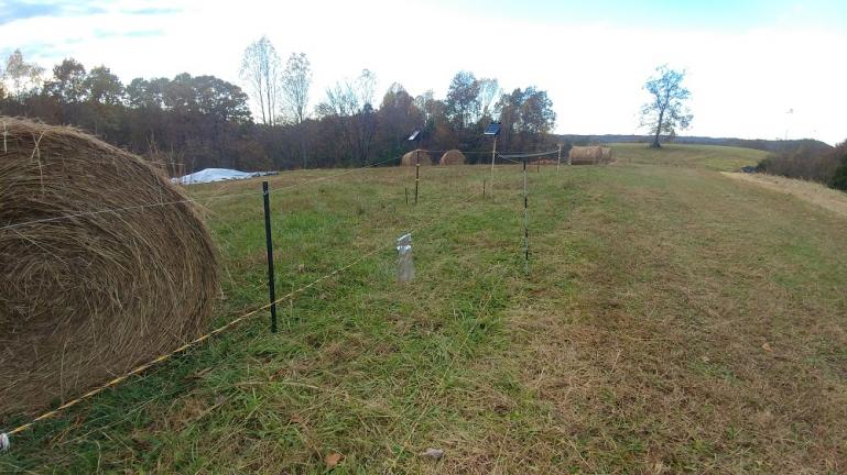3-d solar electric fence errected to protect the berries from deer nibbles 11-7-18