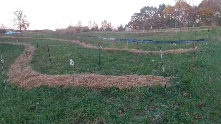berry swales and 3-d fences