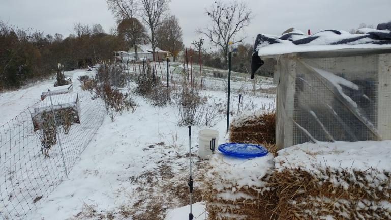 Chickens 1st snow and full day below zero   11-12-19