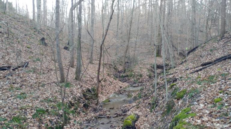 The Point - babbling creek in surround sound 12-15-18