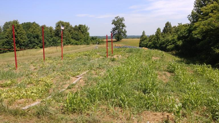 The same bed in June.  Diakon radish everywhere, croppy crops on the left and sorghum on the right.  We had very poor germination on all of our crops.  The seed we'd saved from WV had a hard life before it got in the ground.
