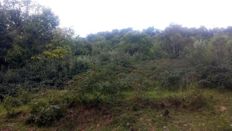hillside brush spring 2015