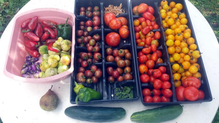 food & medicine
