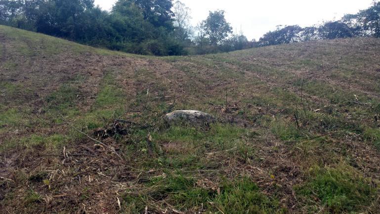 future wienie roast / crop processing and rest spot