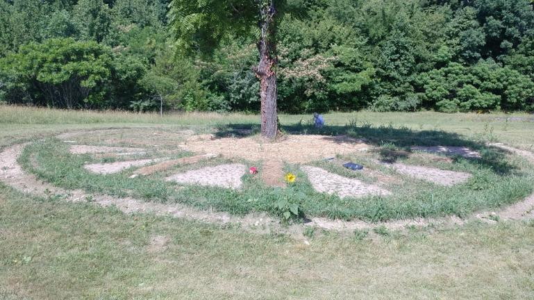 June '18 Garden of the Sun.  this is host to plants that love to grow with Walnut and that birds love to eat.  The Sunflowers will stand through winter and we will be placing a slew of bird houses in the tree.  The layout is a working sundial.