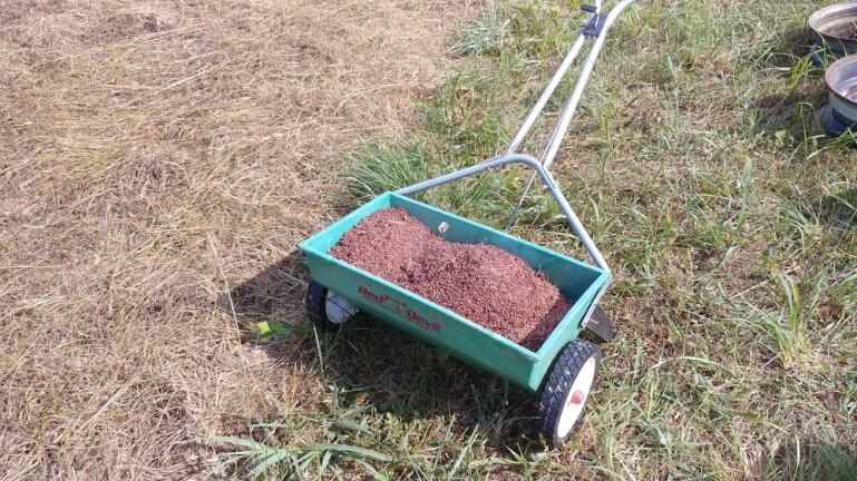 After scattering the fresh patch of dirt with Diakon Radish, Cleom, Wild Dagga, Cow Pea and Mugwort. I used the spreader to distribute a healthy dose of Sorghum seed harvested from our patch in WV and covered the whole thing with a layer of straw.