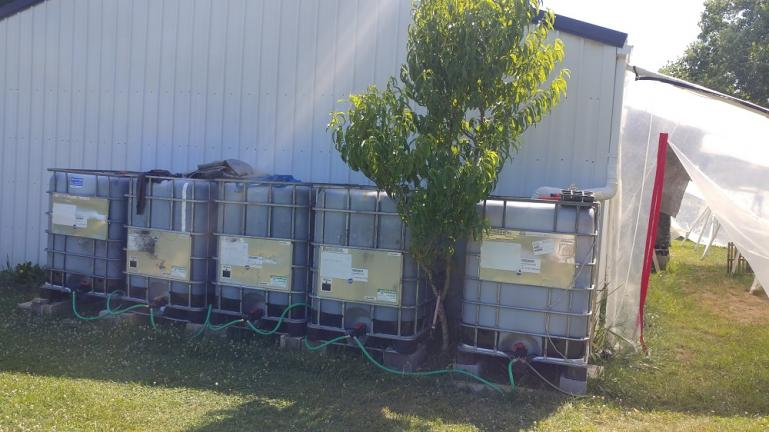 Our arsenal of rain water tanks.  Still need at least 2 more to complete the set..  That's a peach tree.  It made 1 peach this year... but it didn't mature.