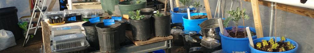 Vertical PVC Grow Tubes in the Greenhouse hold lettuce strawberry and Nasturtium.  They get watered from the top and in trickles down better than money.