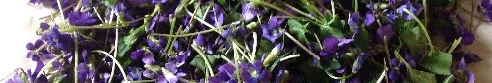 viola bloom and leaf