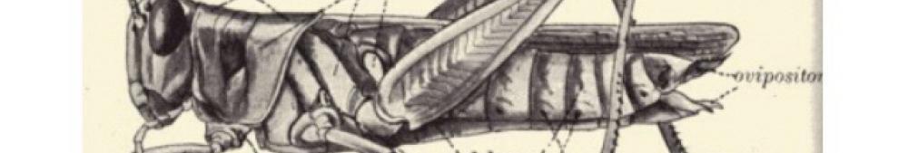 locust from finedictionary.com