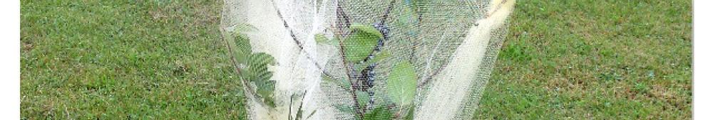 gianni's apple tree in an apple tree wrapped in tulle