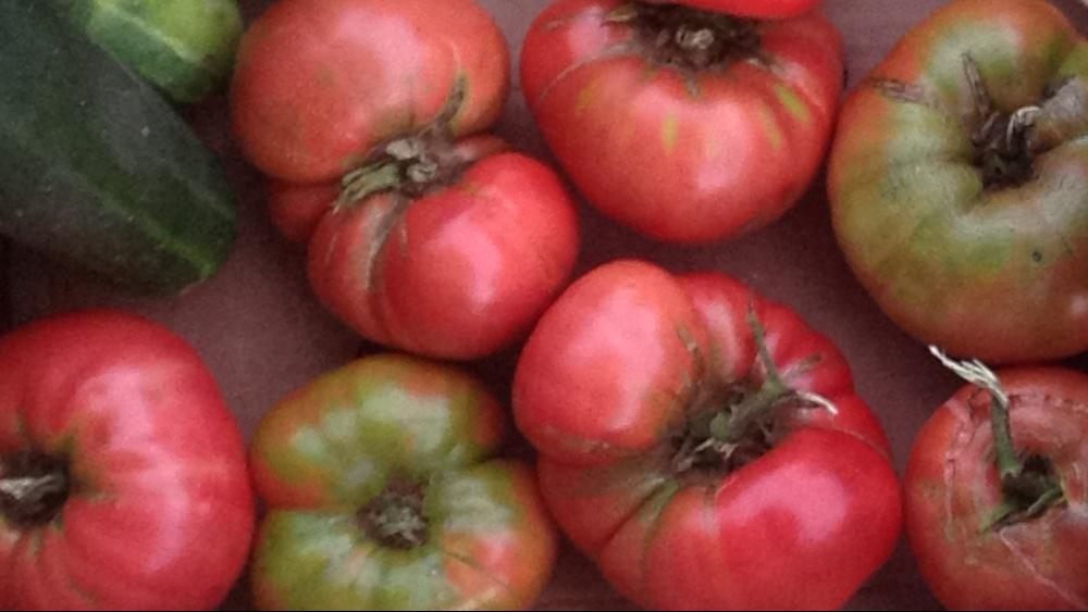 Tomato Clan